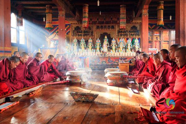Monks Praying at Gangtey Shedra